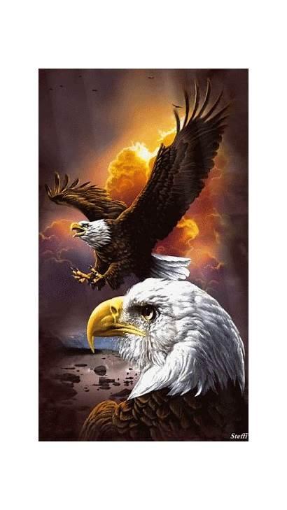 Eagles Bald Eagle Birds Google Gifs Adler