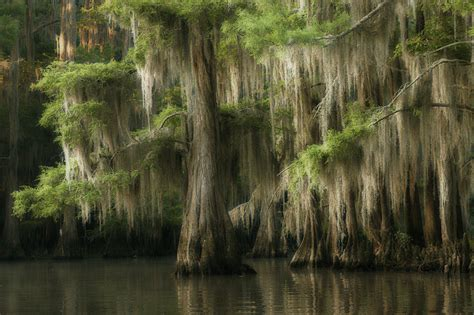 Caddo Lake, Texas  Photonet Photography Forums