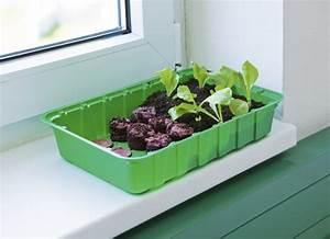 Zimmer treibhaus mini mit quelltabs anzucht windhager for Garten planen mit balkon treibhaus
