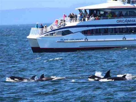 Orca Whale Watching In The San Juan Islands