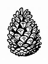 Pine Cone Coloring Printable sketch template