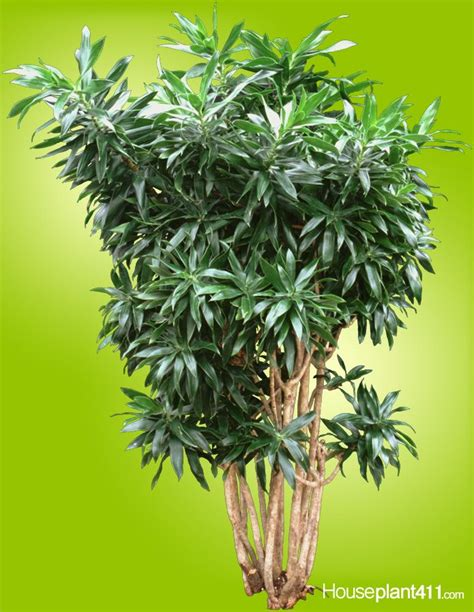68 Best How To Identify A Houseplant Images On Pinterest
