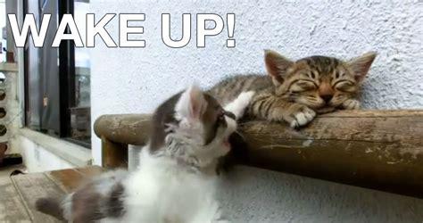wake  buddy katze  katze wecken