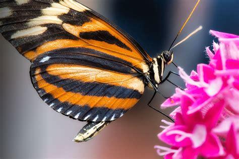 schmetterling blume foto bild tiere zoo wildpark falknerei insekten spinnen bilder
