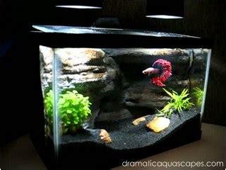 dramatic aquascapes diy aquarium background betta paradise