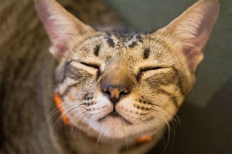 cat eye boogers    normal