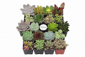 The Best Places To Buy Plants Online  U2014 House Plants For Sale