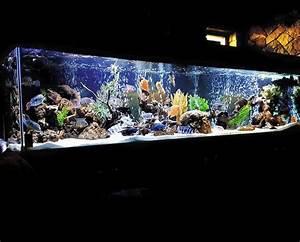 Wazeers Aquariums - Wazeers Aquariums - Home