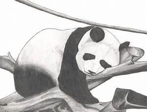 Panda Bear resting by SigfriedX on DeviantArt