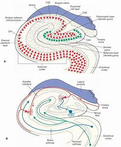 The Limbic System  Integrative Systems  Part 1