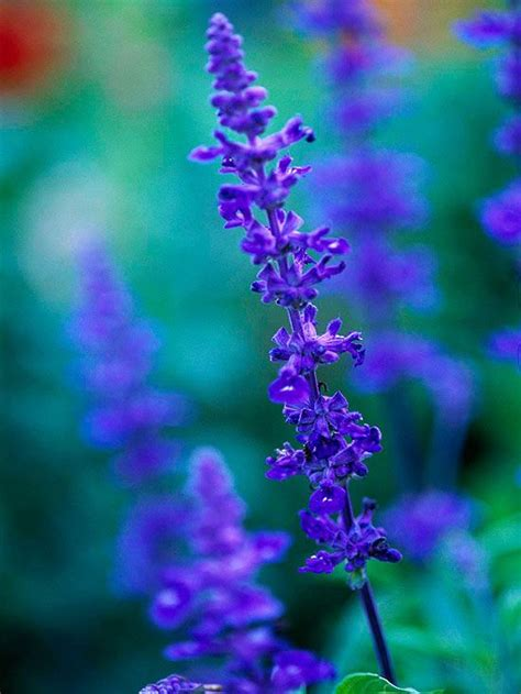 zone 4 flowers 337 best images about perennials for zone 4 on pinterest delphiniums zone 4 perennials and