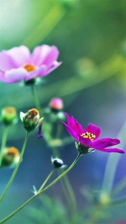 Mobile Wallpapers Flower Phone Flowers Nature 3d