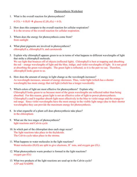 Photosynthesis Worksheet Answers Resultinfos