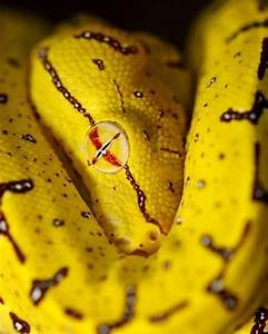 23 best images about Snakes on Pinterest | Black mamba ...