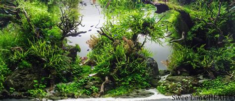 Precision Aquascapes - finishbedrock 169 37 186 swee lim cheah iaplc 2014 aquascape