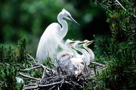 bird photo gallery