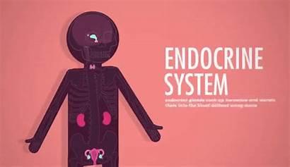 Endocrine System Gifs Glands Hormones Crash Course
