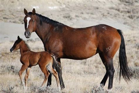 horse names popular most buzzsharer midnight king