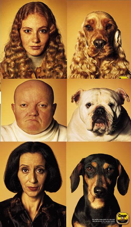 dogs owners dog pet resemble owner similar alike animals headed challenge purebred breeders pets llc humans looking human person food
