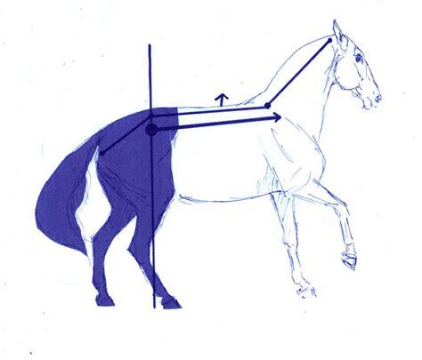 Vorderlastigkeit und natürliche Schiefe des Pferdes