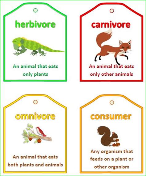 Herbivorous Clipart Food Chain  Pencil And In Color Herbivorous Clipart Food Chain