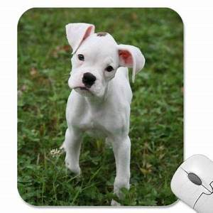 White Boxer Puppy 2 Mouse Mats from http://www.zazzle.com ...
