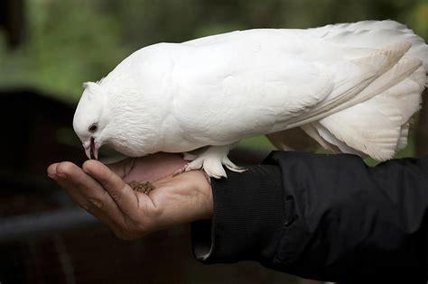 Low Maintenance Pet Bird Species