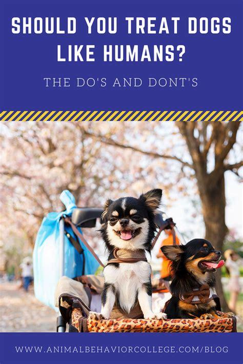 Should You Treat Dogs Like Humans Animal Behavior