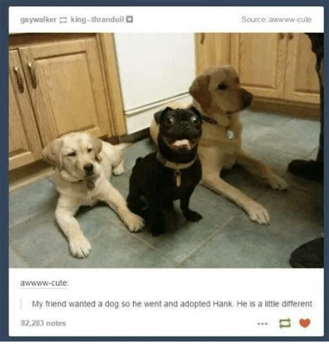 Gay Dog Meme - 25 best memes about king thranduil king thranduil memes