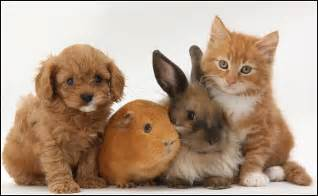 Shed Free Large Dogs by Kittens And Puppies And Bunnies And Hamsters Kitten