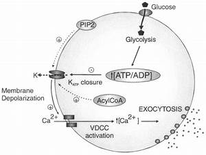 The Diagram Shows The Steps In The Homeostasis Pathway