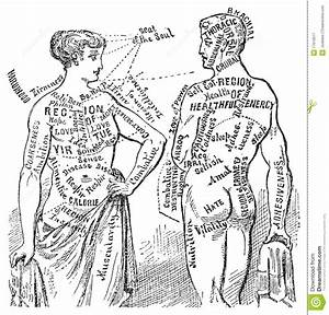 Medical Anotomical Vintage Diagram Illustration Royalty