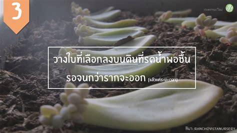 Bloggang.com : JinnyTent : การขยายพันธุ์กุหลาบหิน