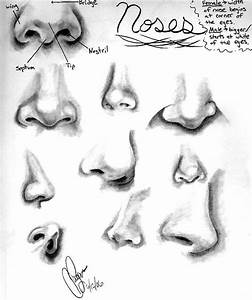 127 best images about Human Nose Tutorials / References on ...