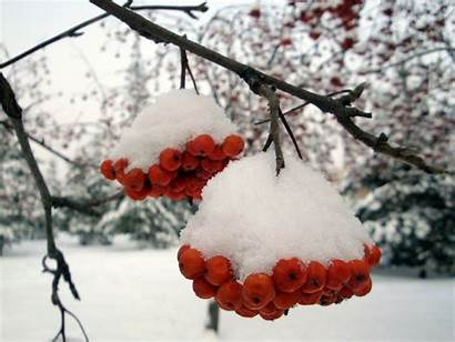 Snow Scenery Wallpapers Falling Snowfall Cave Odd