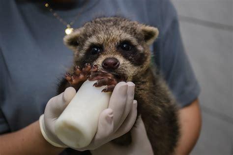 Animais silvestres são resgatados pelo Zoológico Municipal ...