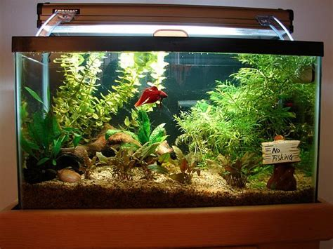tropical fish tank decorations fish tank decoration ideas aquatic fish tank decoration ideas tanked fish