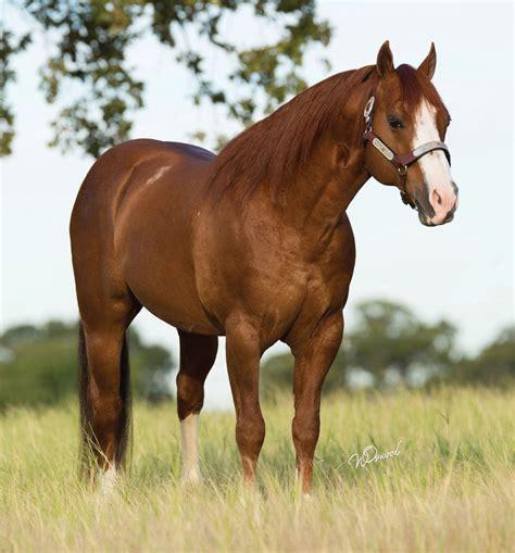Stallion Register - Barrel Horses, Quarter Horses and ...