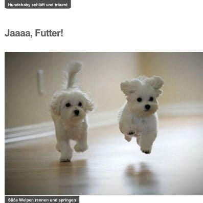hunderasse auf bilder  tiere hund haustiere