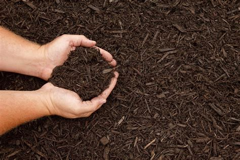 purpose of mulch mulching tips for shrubbery in the home landscape extension daily