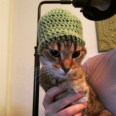 Funny Cats Part 246 40 Pics 10 S Amazing Creatures
