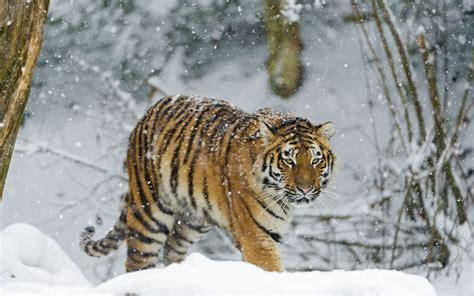 Animals In Snow Wallpaper