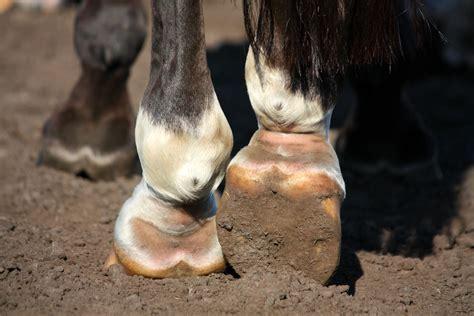 mauke behandeln  geht es deinem pferd bald besser
