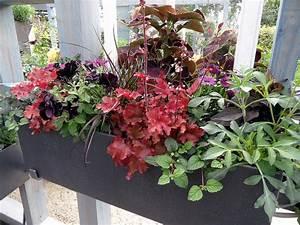 Blumenkästen Bepflanzen Sonnig : balkonpflanzen kaufen leicht gemacht ~ Frokenaadalensverden.com Haus und Dekorationen