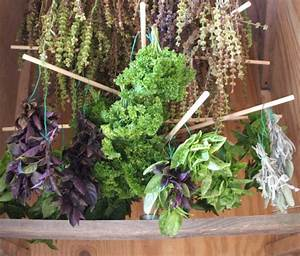 Plante Detoxifiante : plante care te ajuta sa slabesti s n tate happy channel ~ Melissatoandfro.com Idées de Décoration