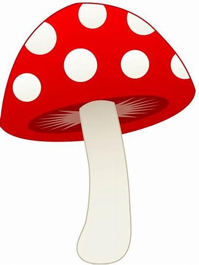 Mushroom Clip Toadstool Sweetclipart