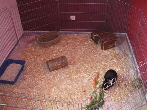 Kaninchen Knabbert Am Gitter Kaninchen
