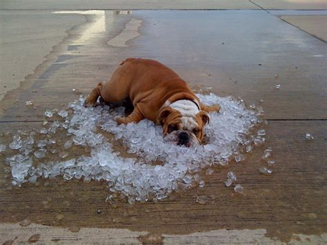 will a heat l keep a dog warm life in the dog lane dogs and weather 17 tips for