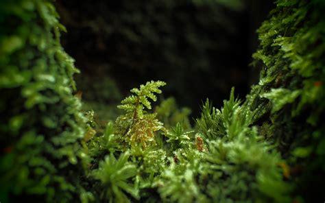 photography macro leaves plants depth  field dark