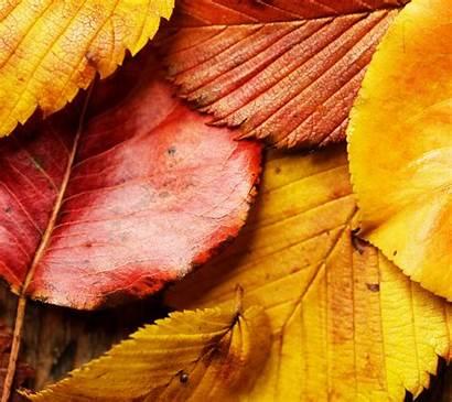 Leaves Autumn Wallpapers Fall Leaf Smartphone Wallpapersafari
